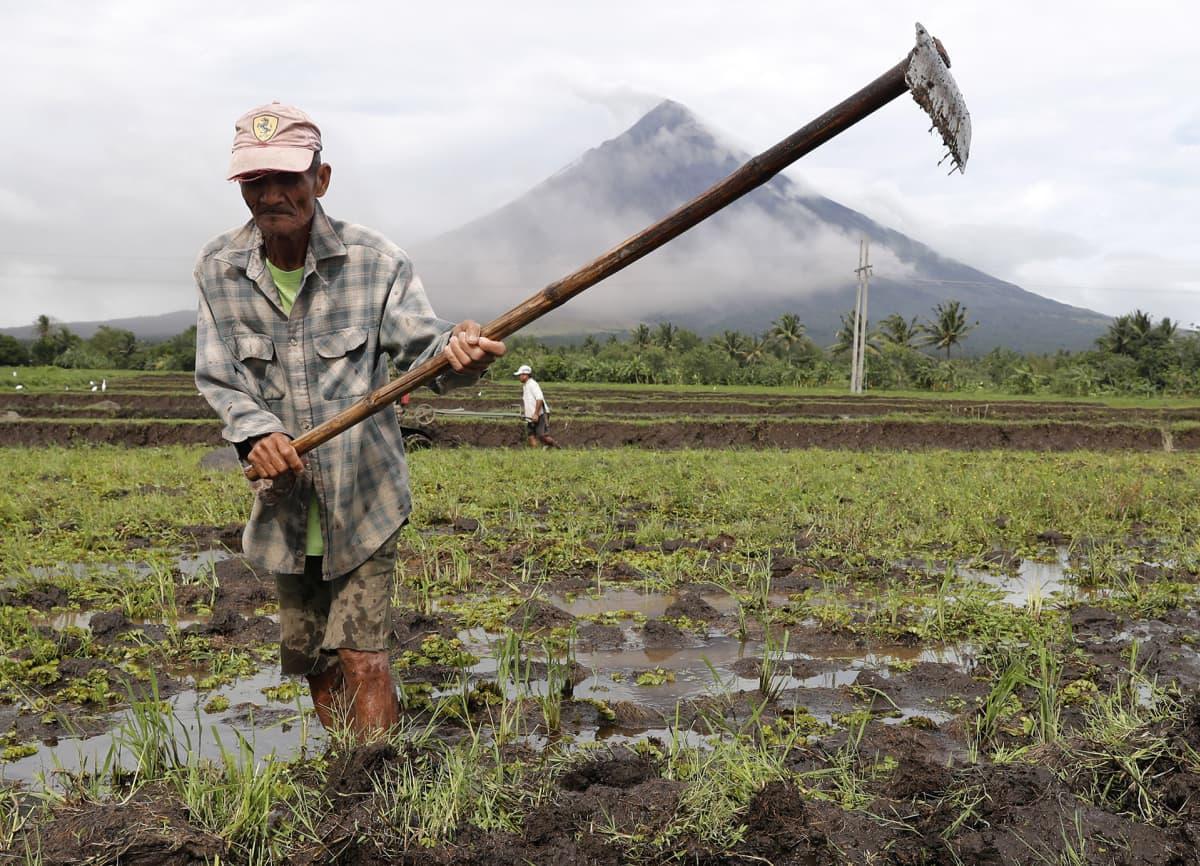 Filippiiniläisviljelijä kyntää riisipeltoaan Mayon-tulivuoren juurella.
