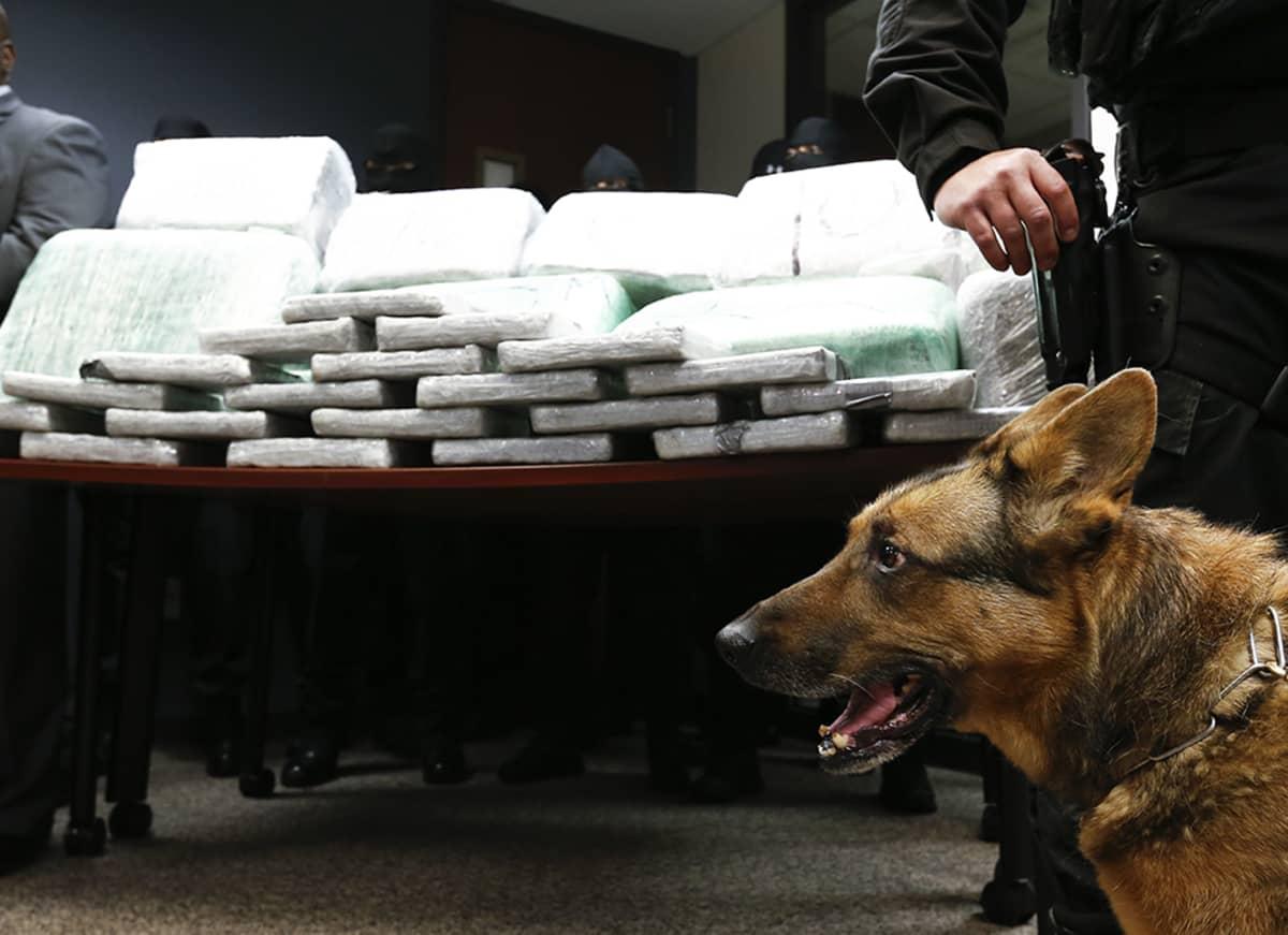 Takavarikoituja huumeita Tuckerissa, Georgian osavaltiossa Yhdysvalloissa 10 tammikuuta 2014.