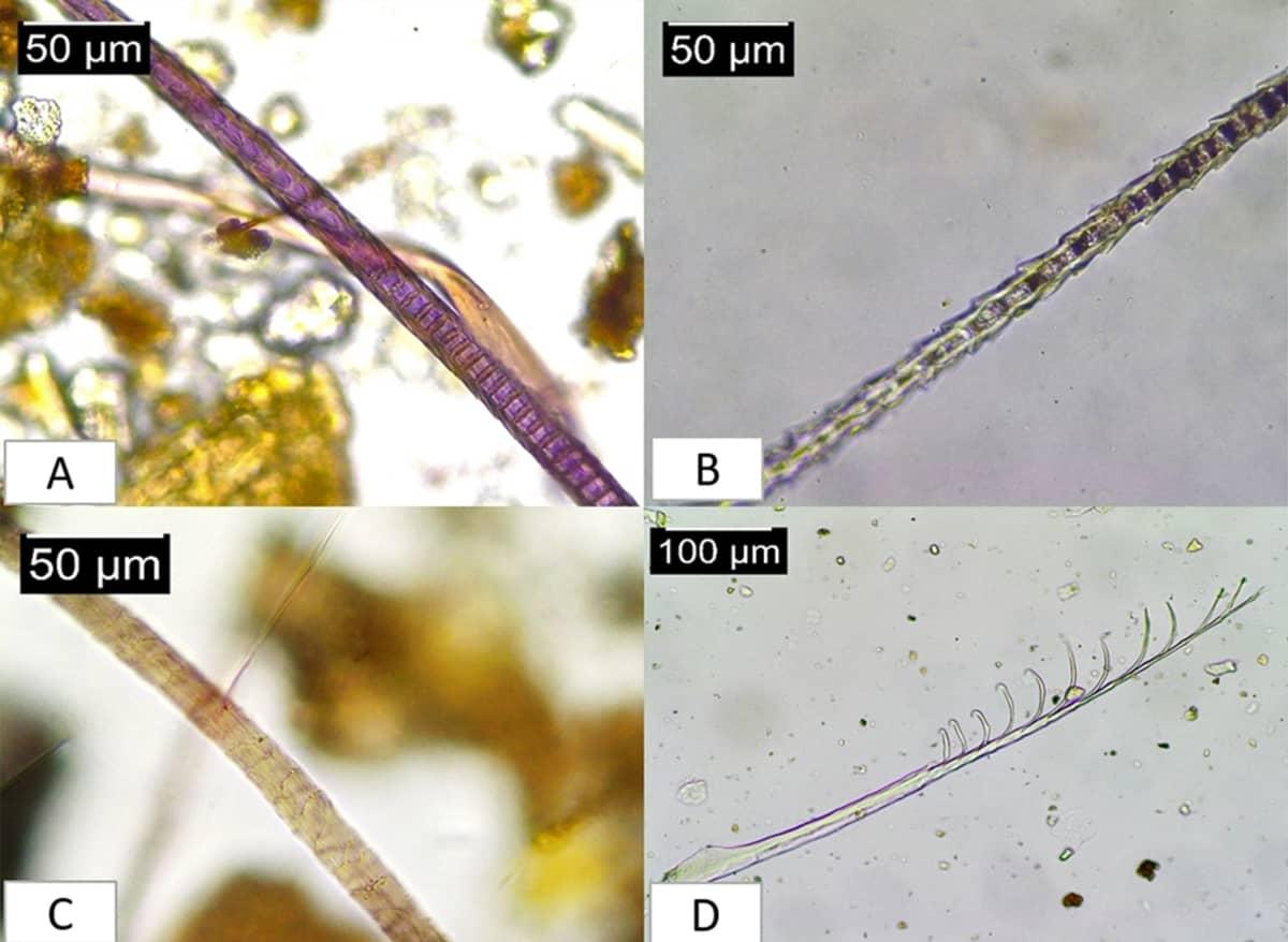 Neljä mikroskooppikuvaa karvoista ja höyhenestä.