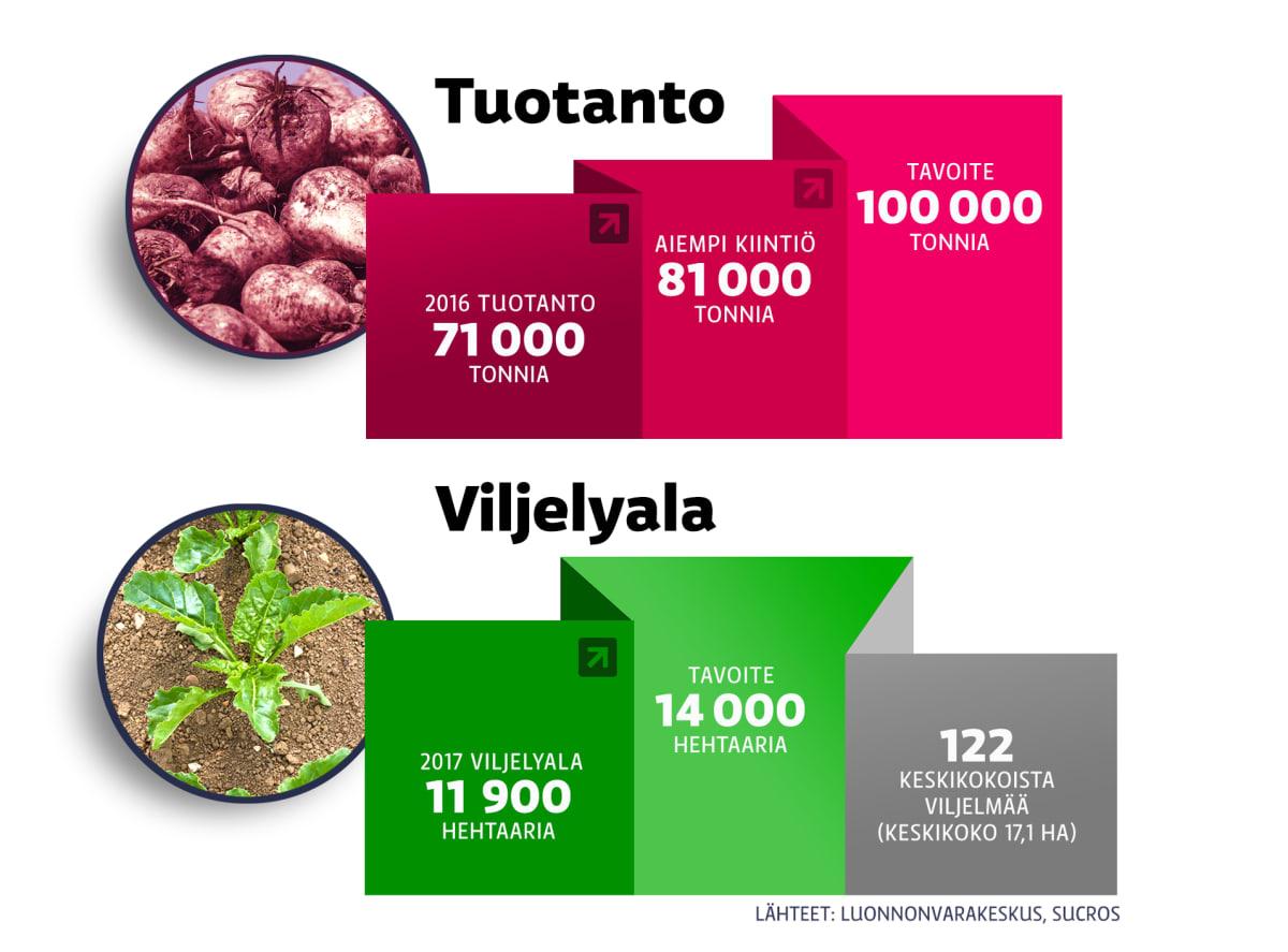 graaffi sokerin tuotannosta ja viljelystä