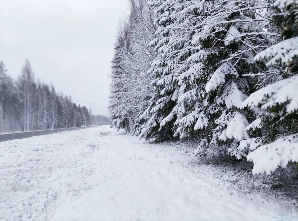 Luminen tienpiennar Joenseen UImaharjussa.