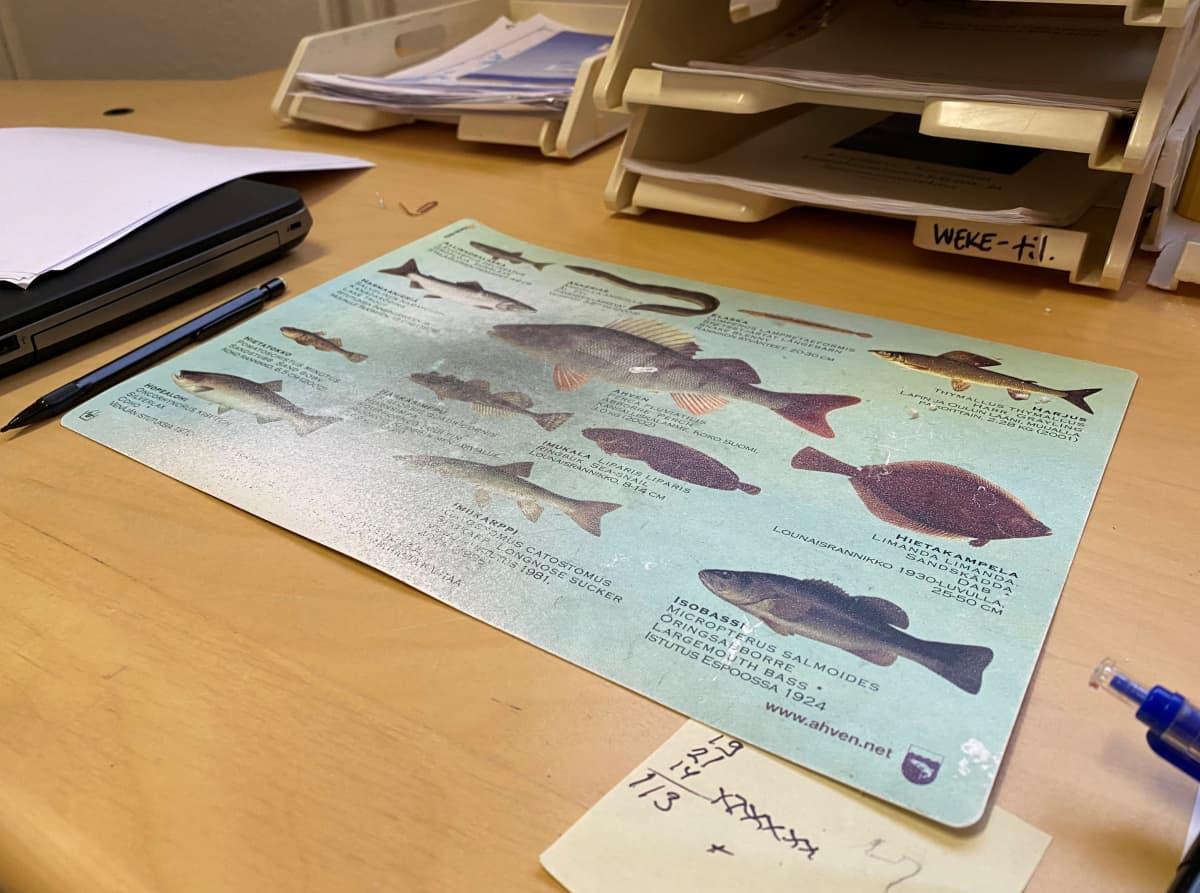 Hiirimatto, jossa kuvituksena kaloja