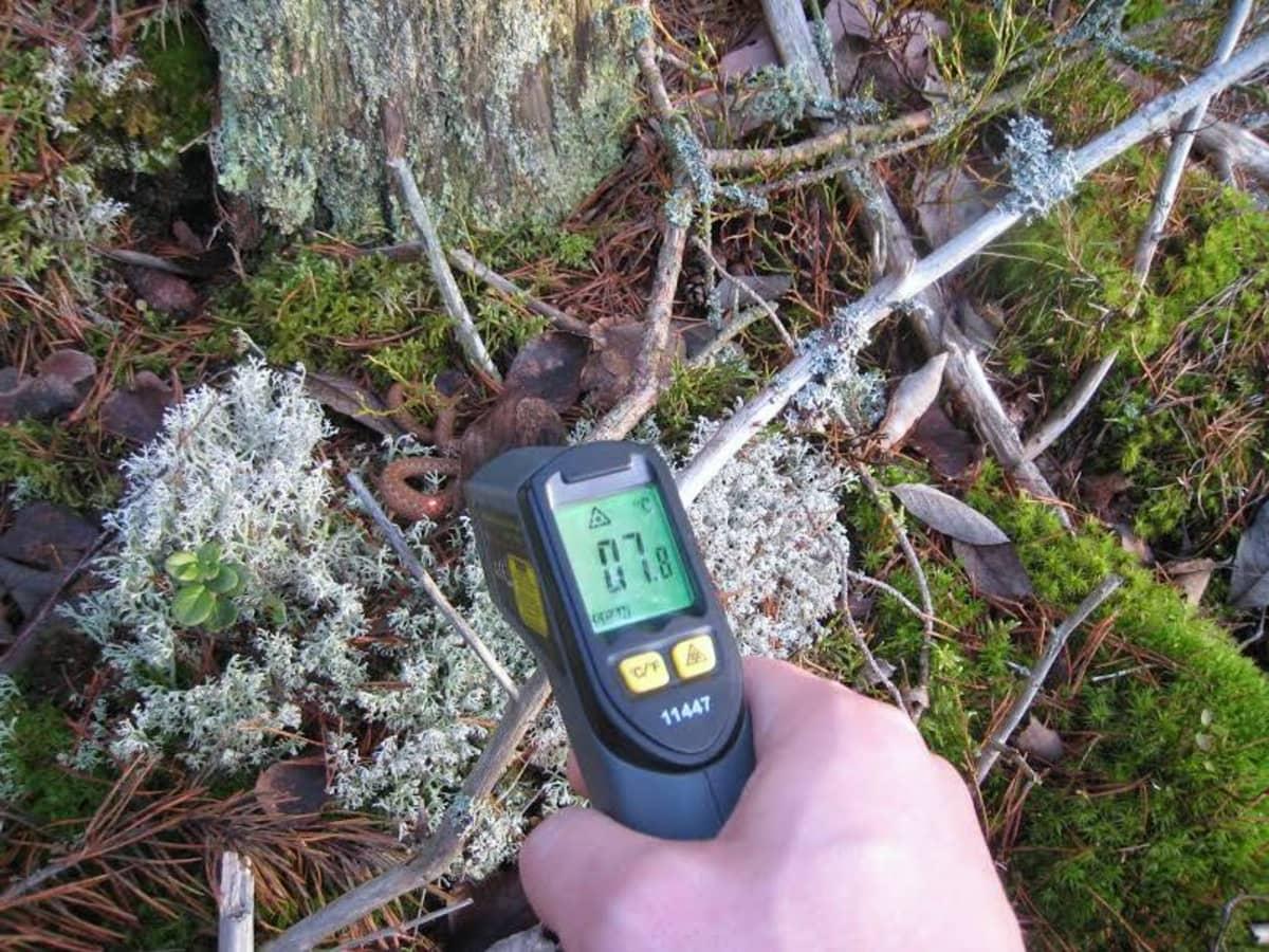 Myrkkykäärmeharrastaja Toni Beckman mittaa käärmeiden lämpötiloja infrapunamittarilla.