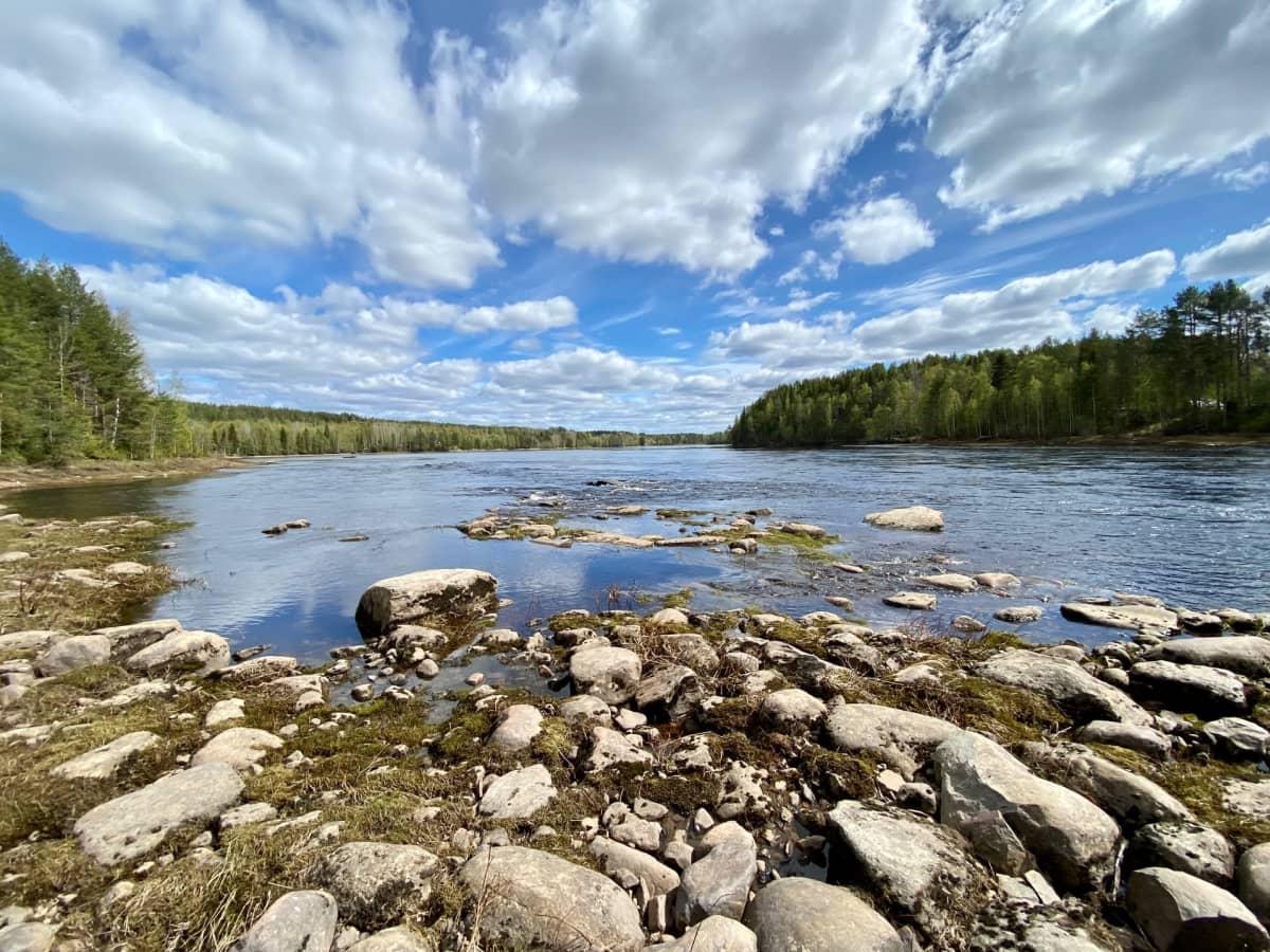 Tervakari on yksi viimeisistä koskipaikoista Kemijoen pääuomassa Kemijärven alapuolella. Sierilän vesivoimala hävittäisi nämä viimeiset kosket.