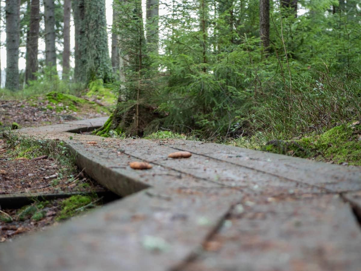 Pitkospuut mutkittelevat metsässä