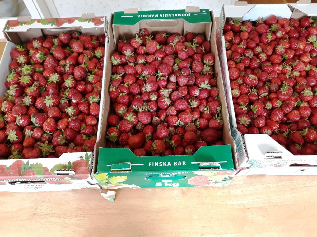 Kolme viiden kilon mansikkalaatikkoa pöydällä