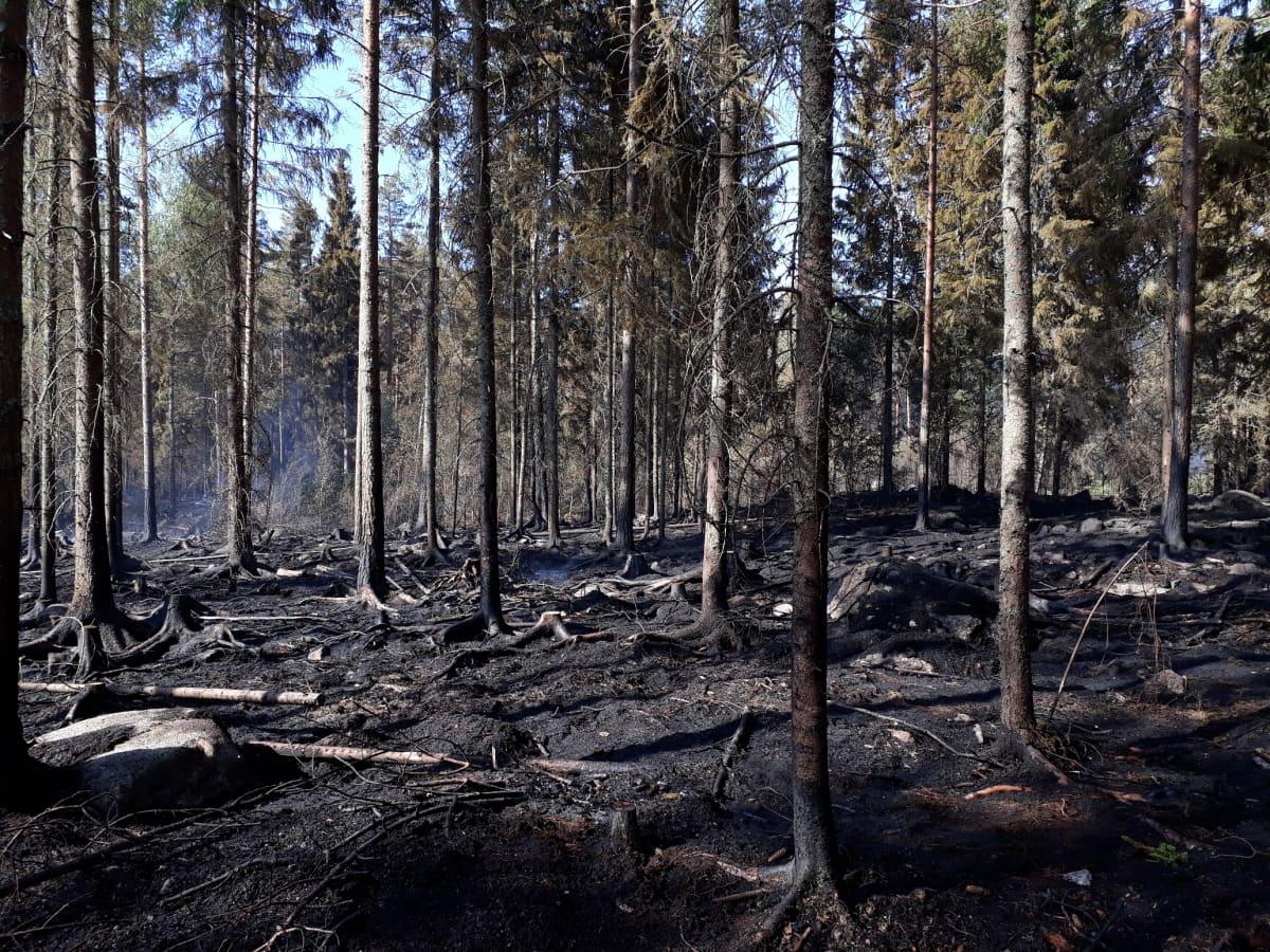 Metsää ja maastoa on palanut yli sadan jalkapallokentän kokoiselta alueelta.