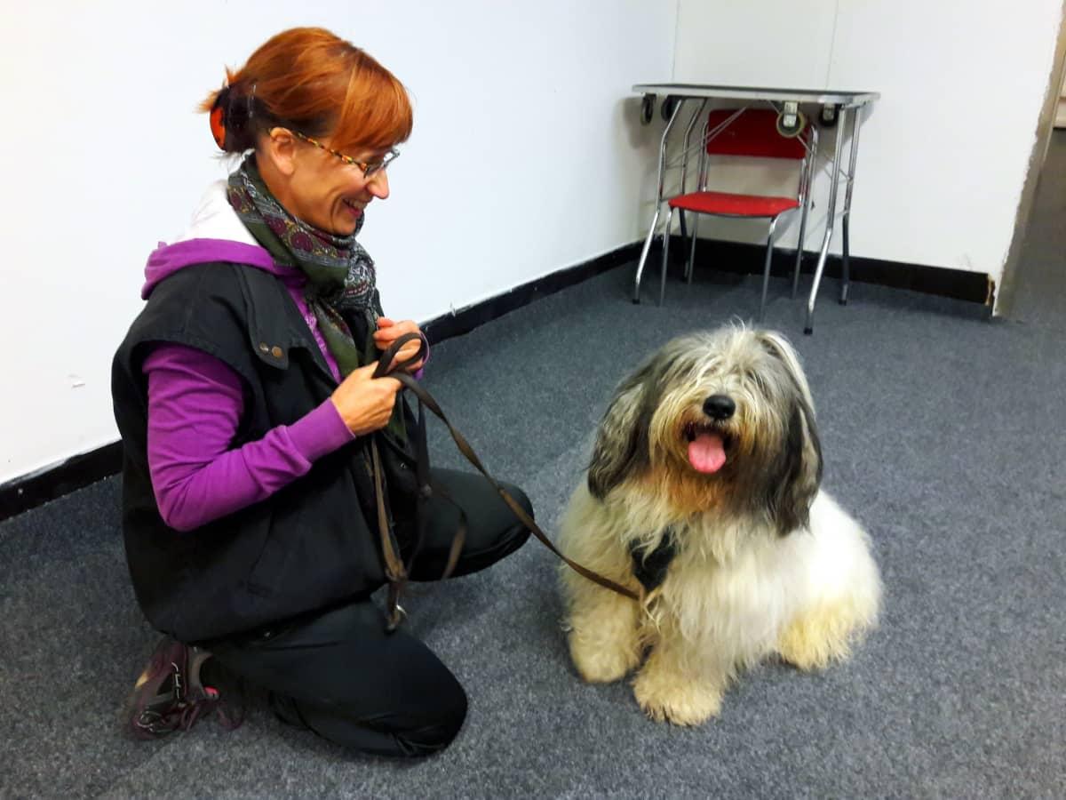 Kotkalainen Marjukka Pylkkänen Pyry-koiransa kanssa koulutustreeneissä.