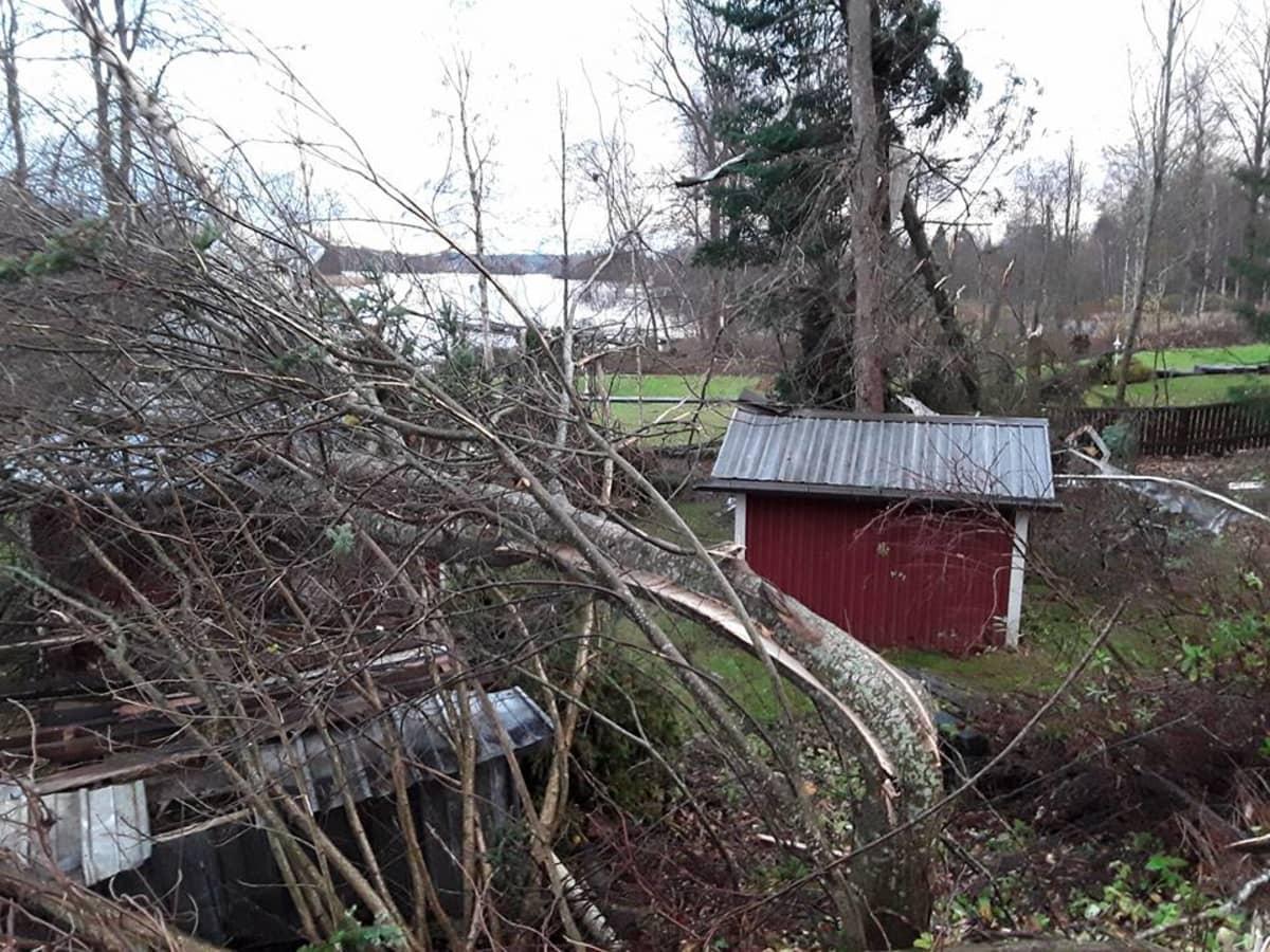 Rakennuksen päälle kaatunut puu.
