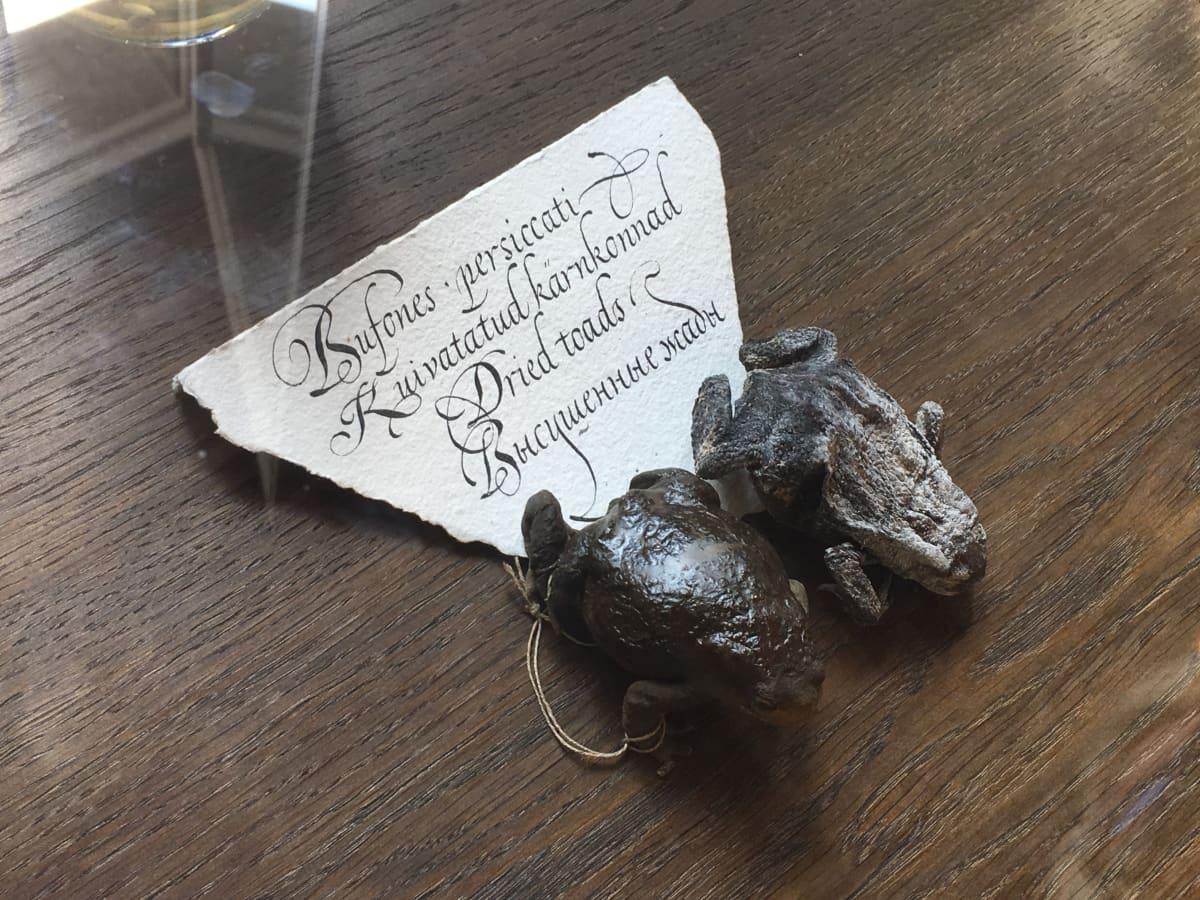 Kuivuneita sammakoita ja vanhanaikaista tekstiä