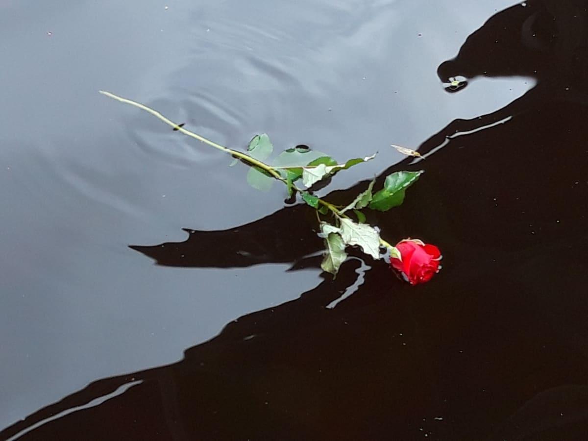 Ruusu vedessä