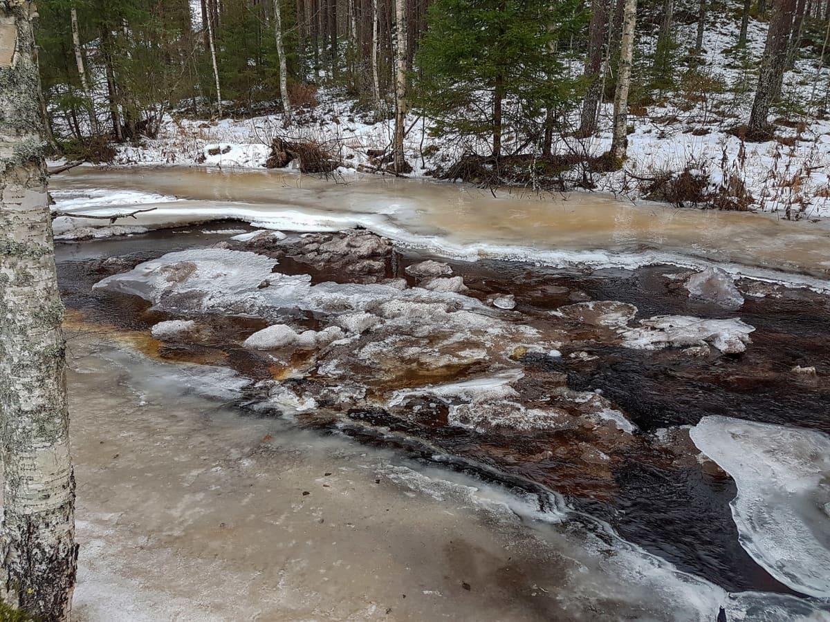 Rusehtava vesi virtaa vuolaana jäisessä joessa.