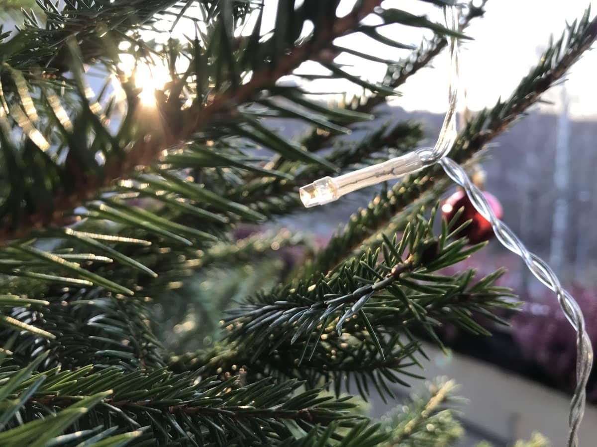 Lähikuva parvekkeen joulukuusesta, näkyy kuusenoksia, valosarjankynttilä ja punainen pallo.