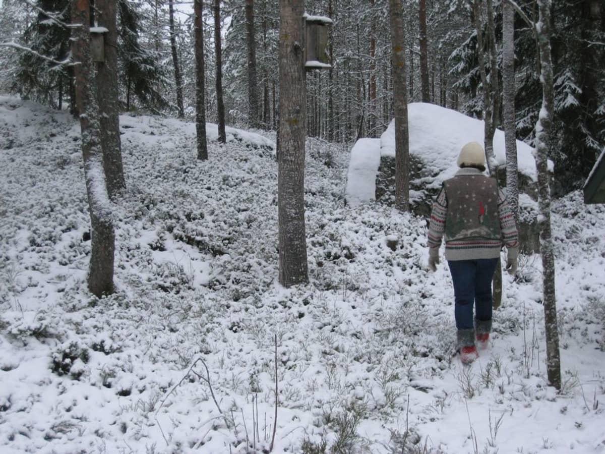 Nainen hakee katajanoksat metsästä.