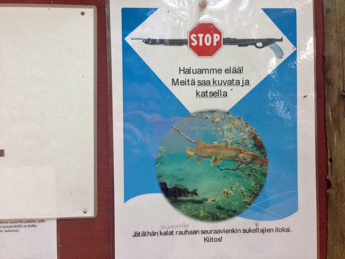Kalojen toivotaan saavan elää Valkiajärvessä.