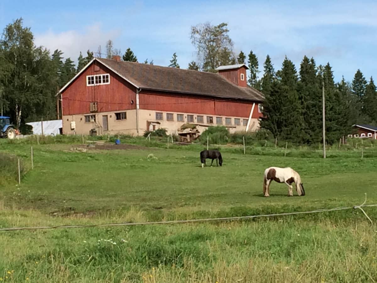 Maatilan navetta ja edessä hevosia laitumella