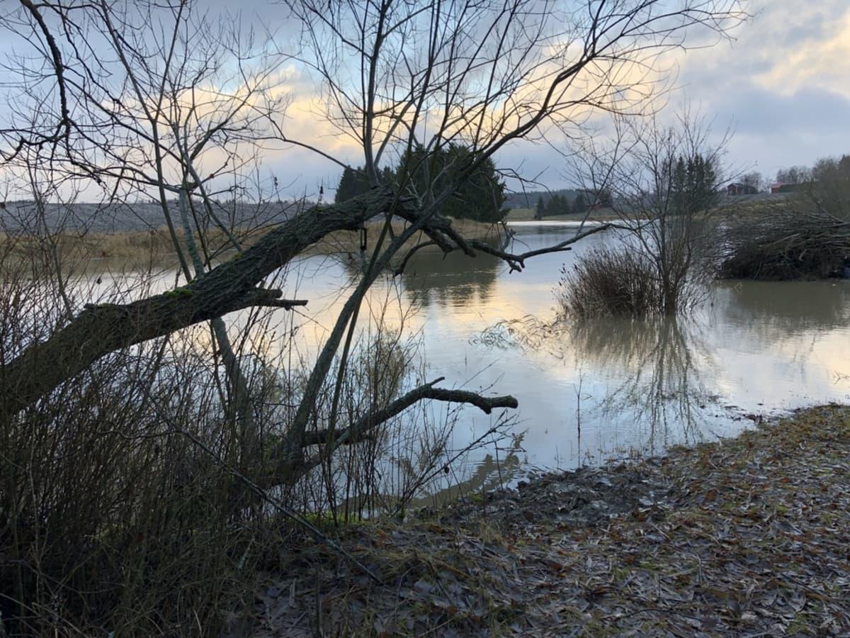 Aurajoen tulvaa Liedon asemalla.
