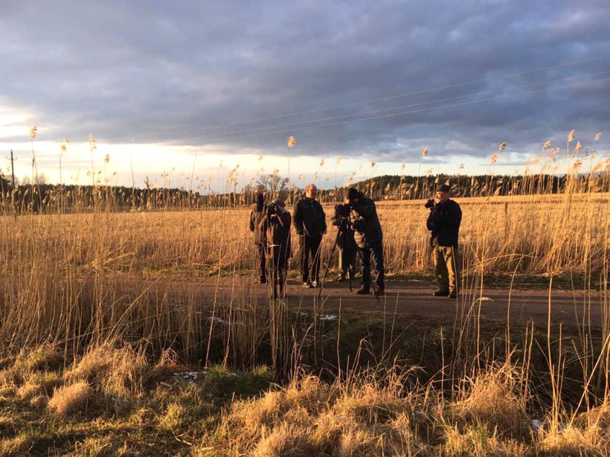 Lintubongareita seisoo peltojen keskellä tiellä.