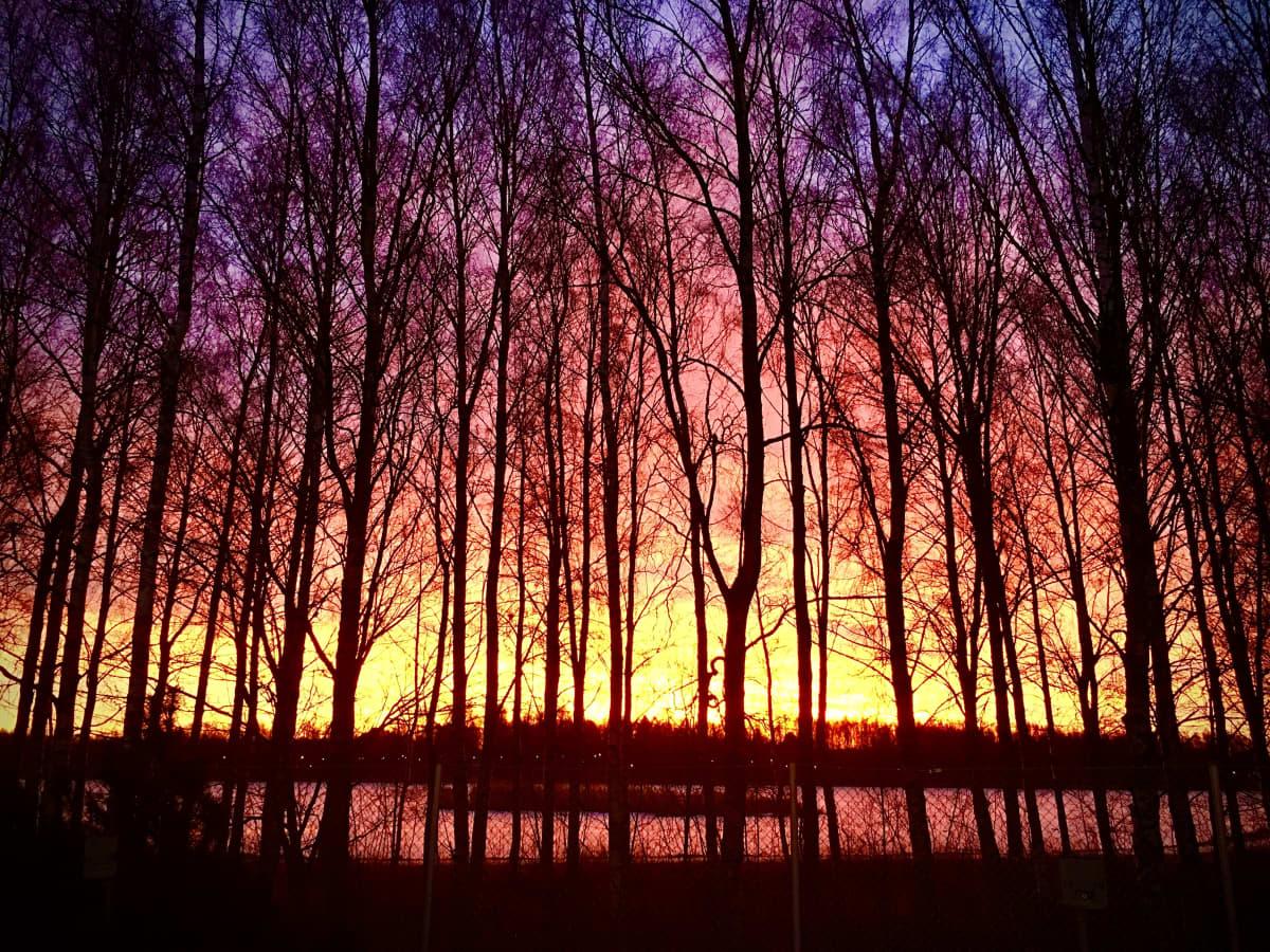 Auringonnousu Vaasassa 14. tammikuuta 2020