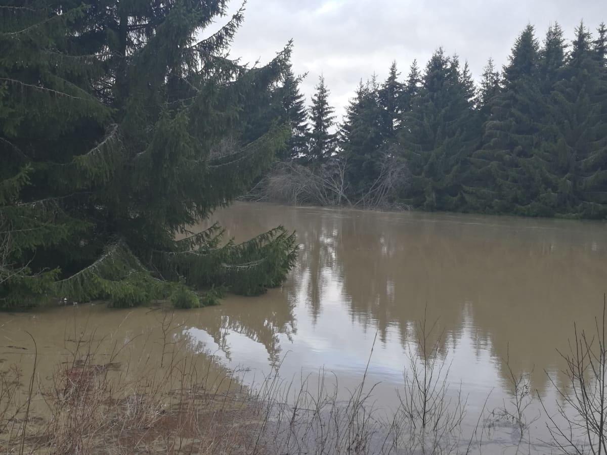 Niinijoki tulvii Loimaalla