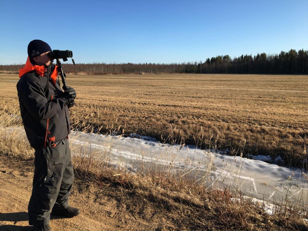 Kuvassa Juhani Hannila katsoo kiikareilla pellolla olevia joutsenia.