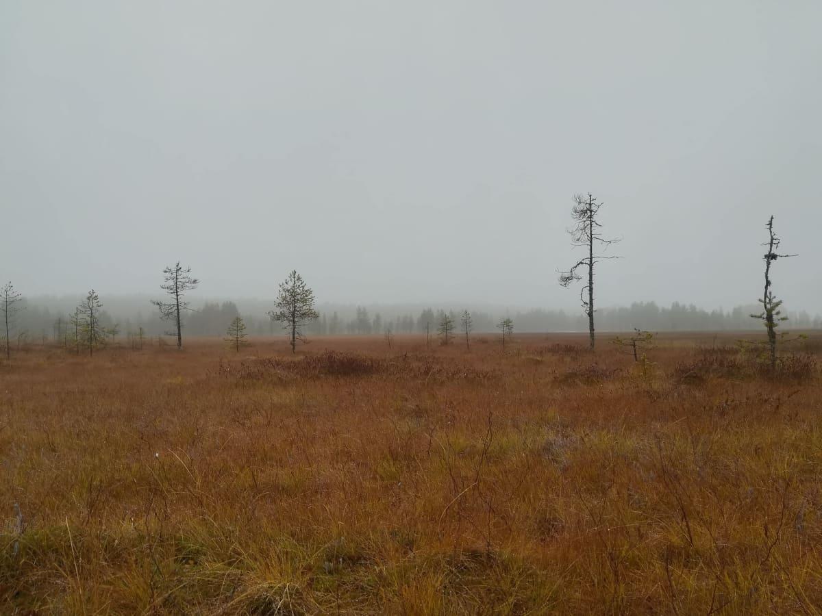 Tiilikkajärven kansallispuiston maisemaa Rautavaaralla.