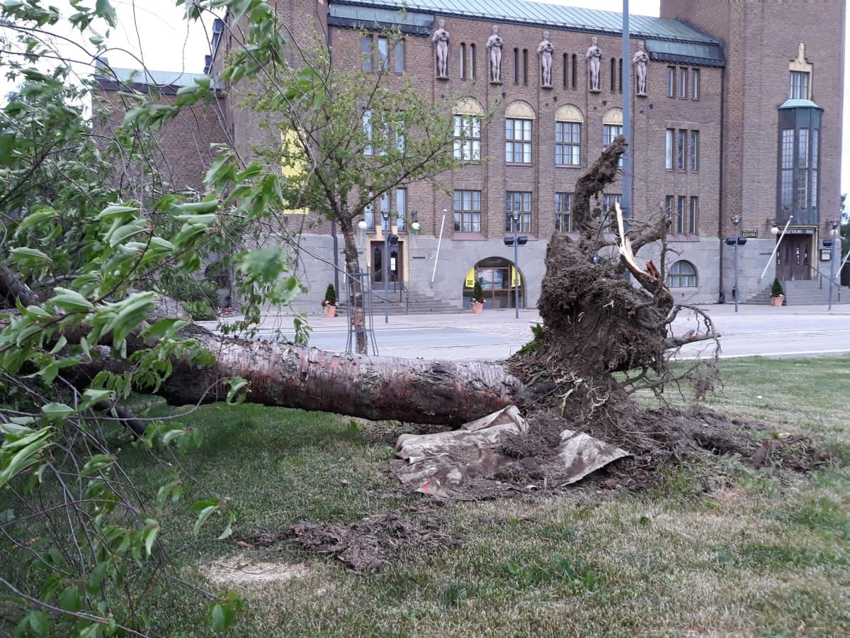 Myrky kaatoi puun Vapaudenpuistosta.