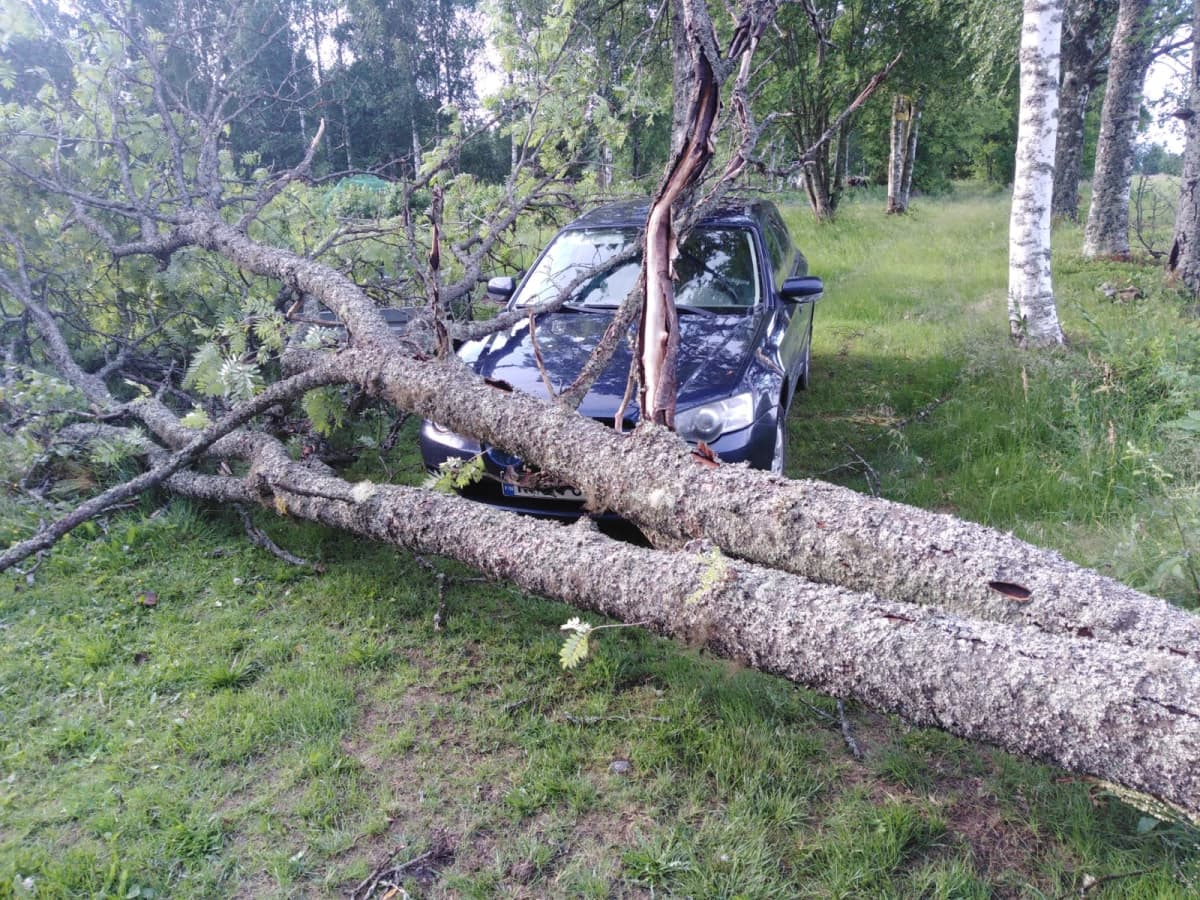 Kuvassa on auton päälle kaatunut pihapihlaja Polvijärven Hukkalassa.