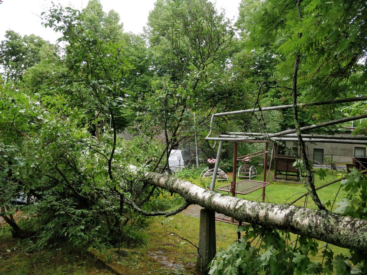 Kerrostalon pihalla myrskyssä kaatunut koivu Kuopion keskustassa.