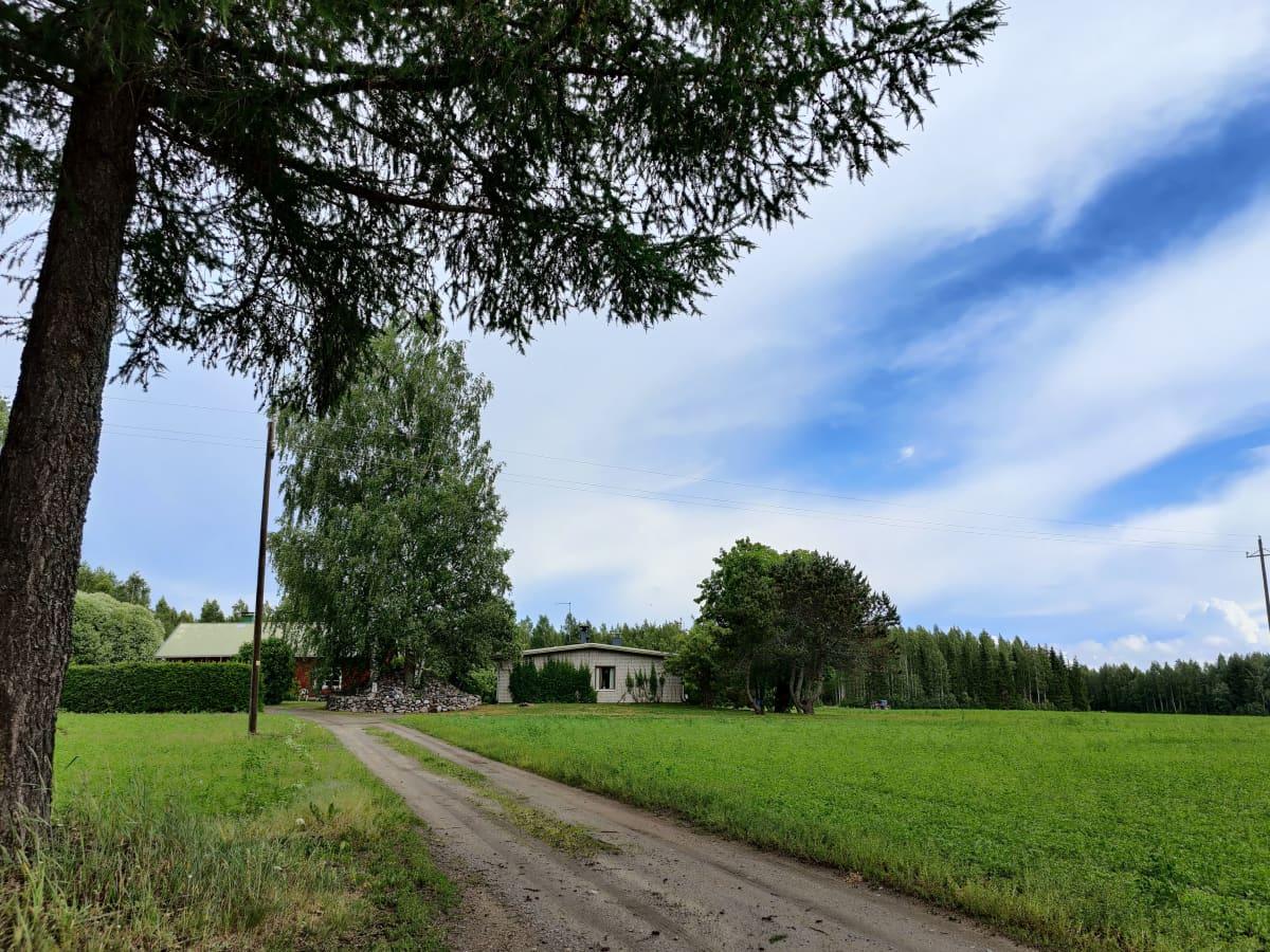 Maatila Etelä-Savossa, kesäkuun aikaan