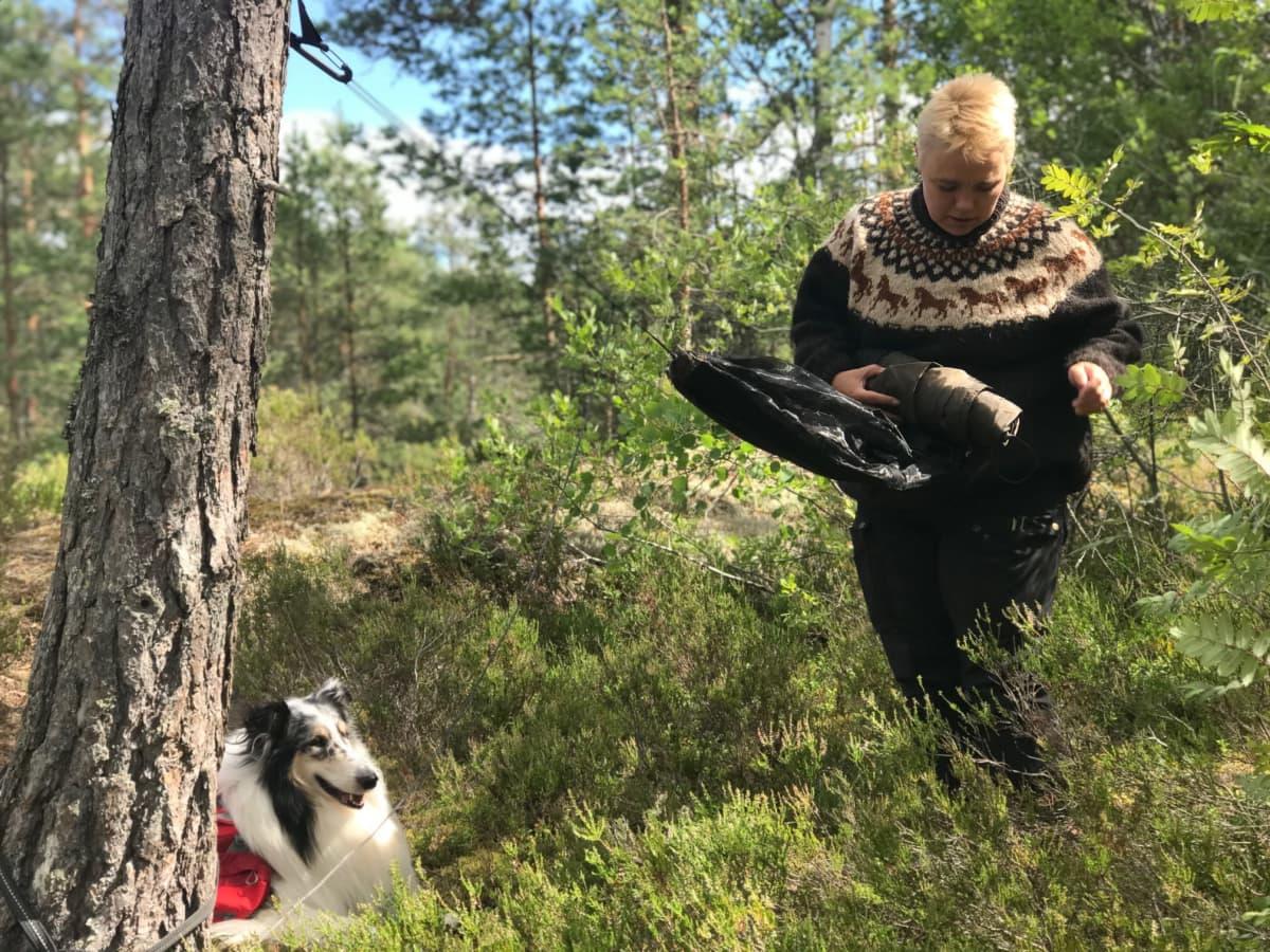 Nainen kerää riippumattoa kasaan mäntymetsässä, koira istuu vieressä mustikan varpujen seassa