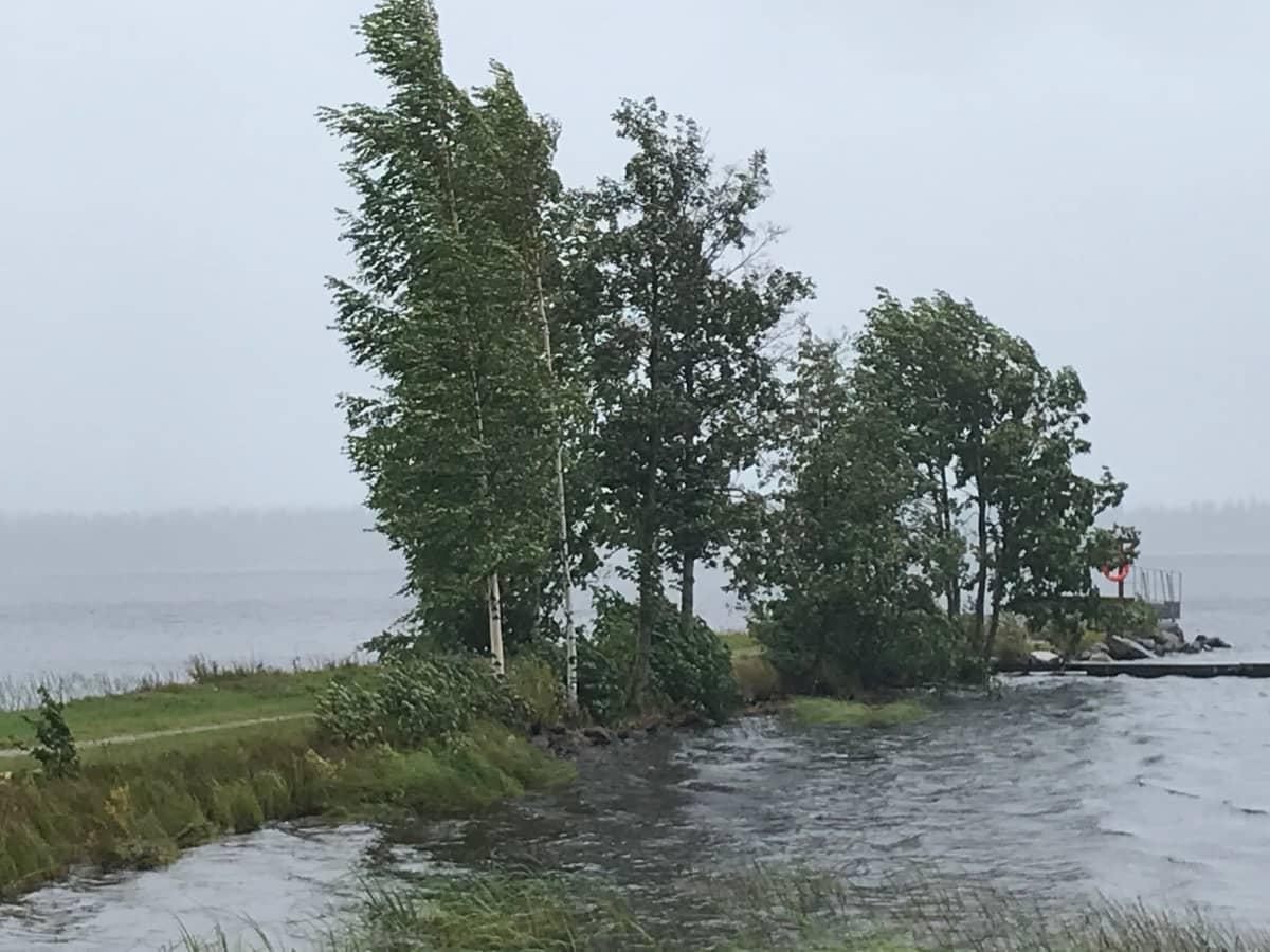 Tuuli heiluttelee puita Jukajärven rannalla Juvalla.