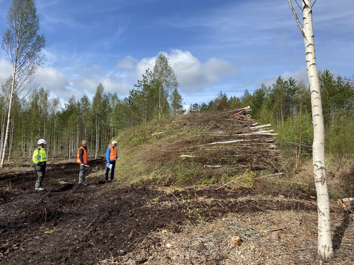 Korjattua puuta pinossa turvemetsän laidalla Peräseinäjoella. Metsäalan ihmisiä vieressä.
