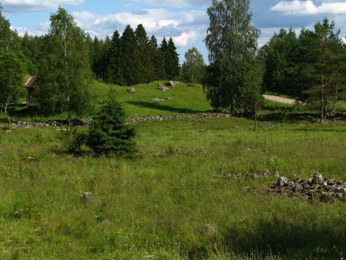 Vihreän vehreä laidun, jolla kiviä ja muutama puu. Puolipilvinen taivas, aurinko paistaa.