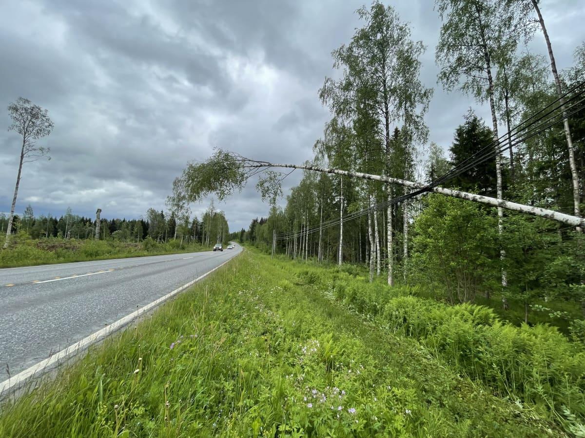 Karttulantiellä Kuopion Rytkyllä sähkölinjalle kaatunut puu.