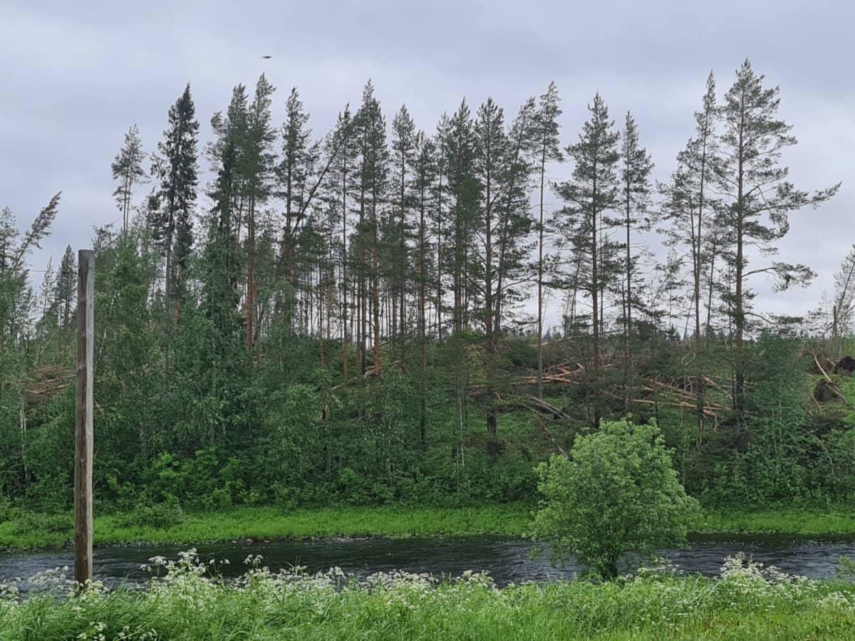 Paula-rajuilman kaatamaa metsää Puolangalla