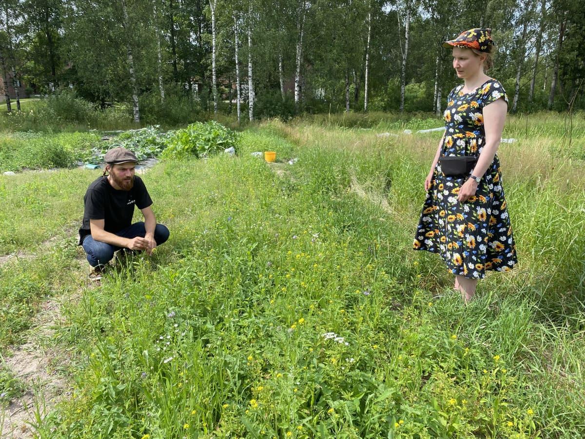 Lahden Lähimmäispalvelun viljelypalsta, jossa kasvaa niittykasveja.