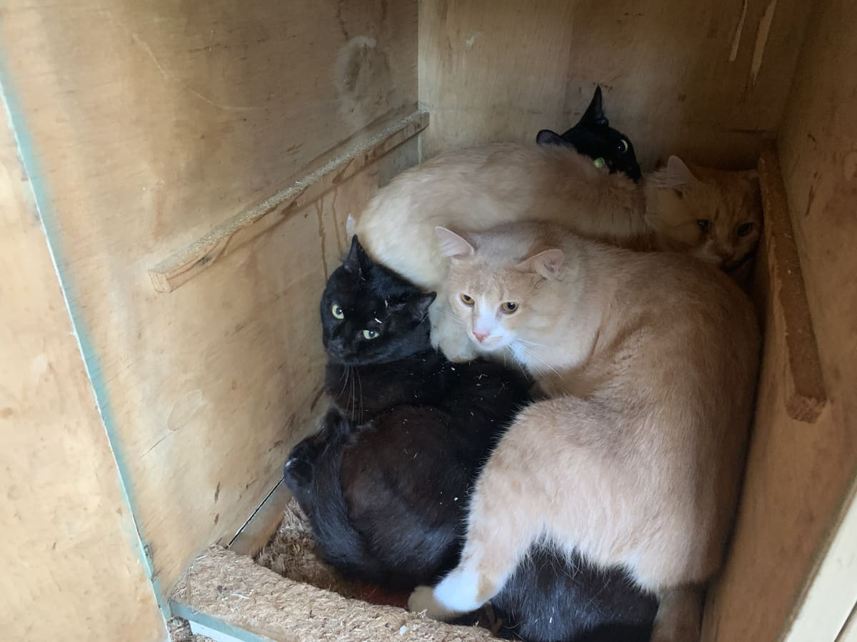 Neljä kissaa läjässä osin toistensa päällä ahtaassa tilassa.