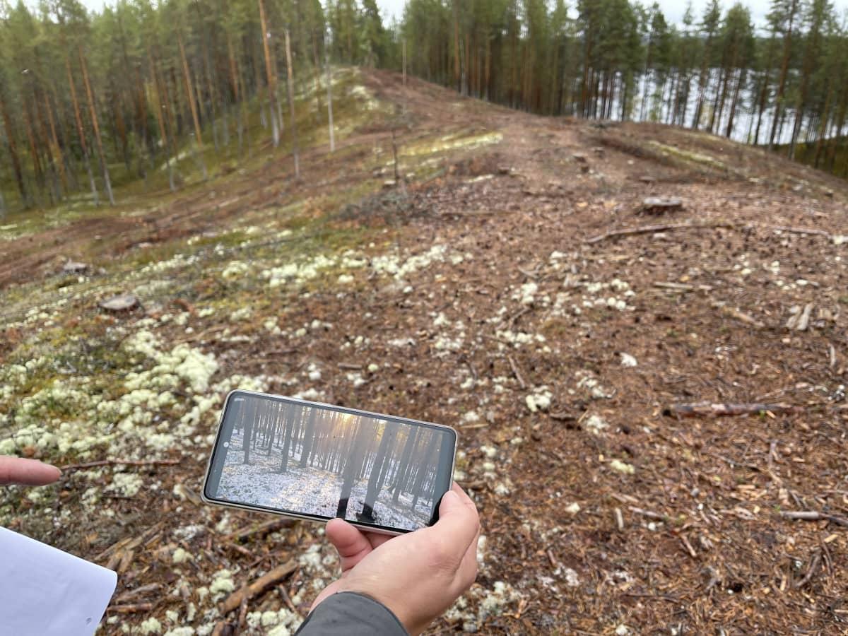 Metsähallituksen Antti Saari esittelee kuvia jotka on otettu ennen hakkuuta.