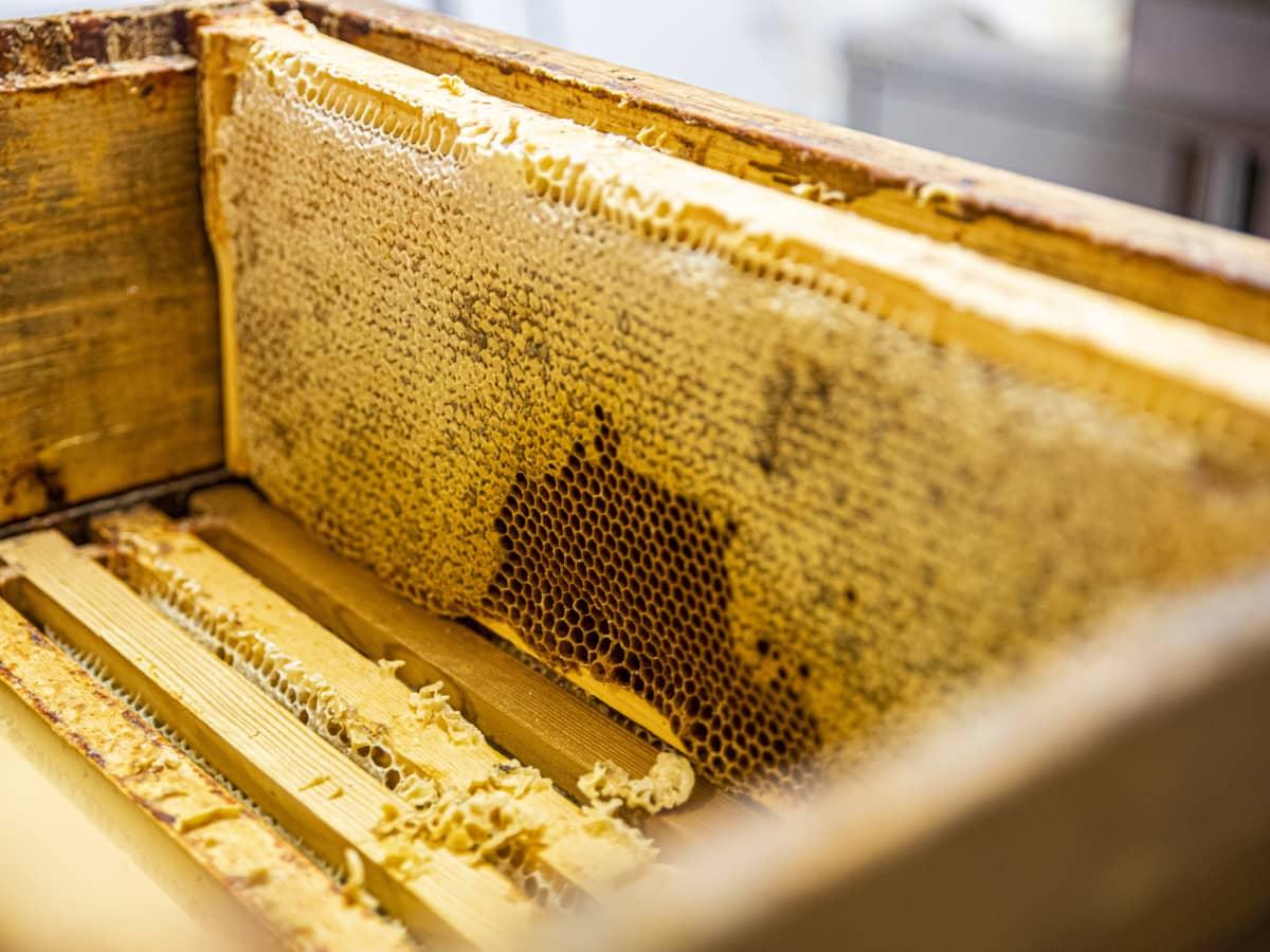 Mehiläispesän hunajakenno.