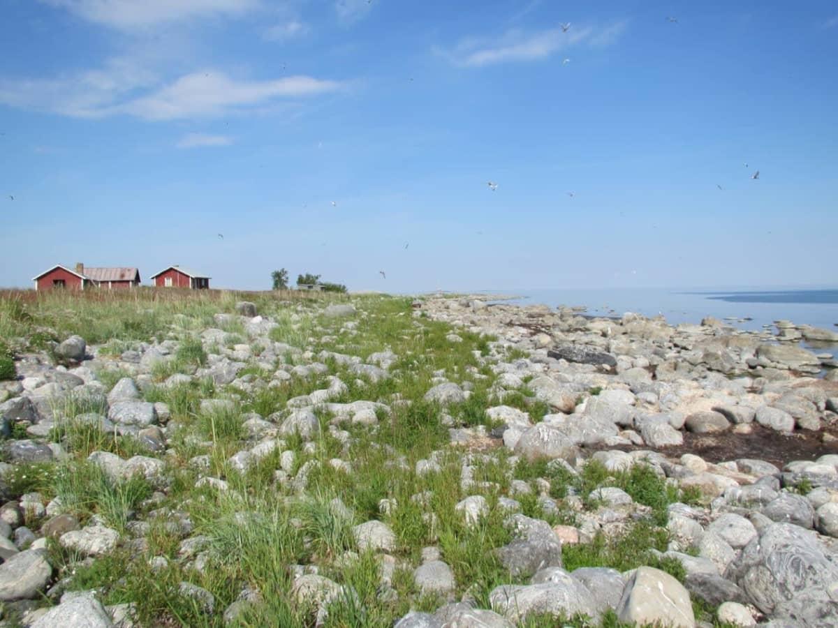 Näkymä merelle Storkallanilla