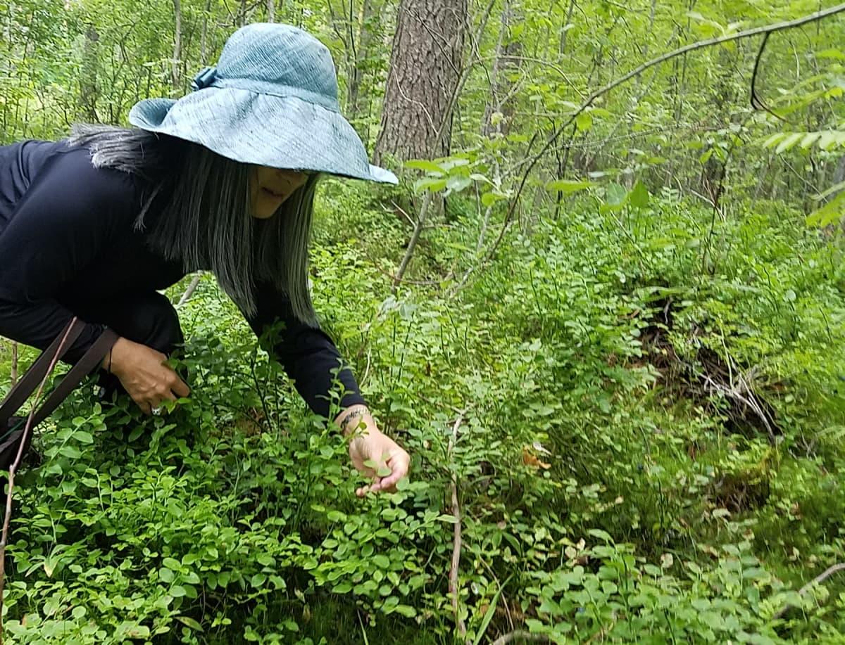 Nainen poimii kyyristyneenä mustikoita metsässä.