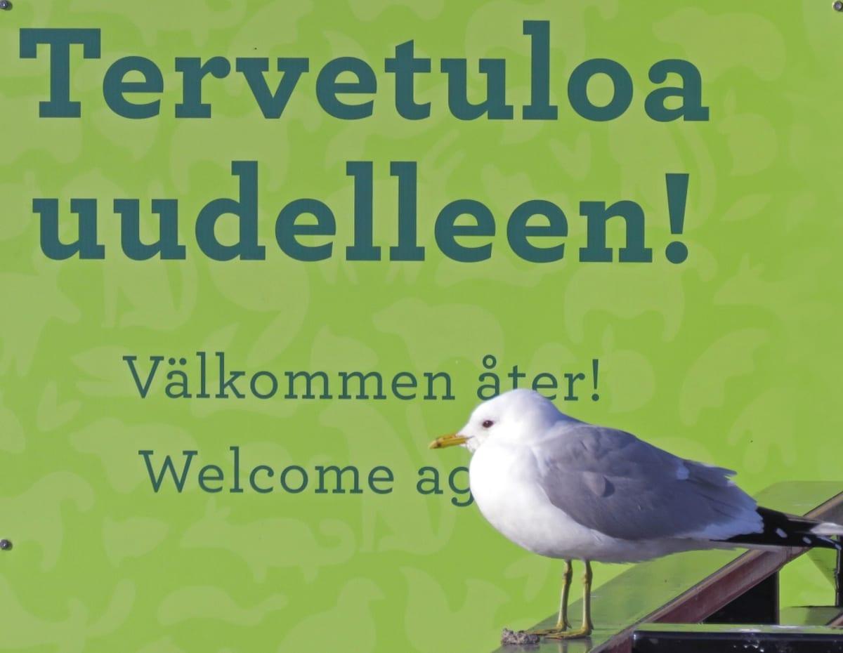 """Kalalokki istuu kyltin edessä, kyltissä lukee suomeksi, ruotsiksi ja englanniksi """"Tervetuloa uudelleen!"""""""