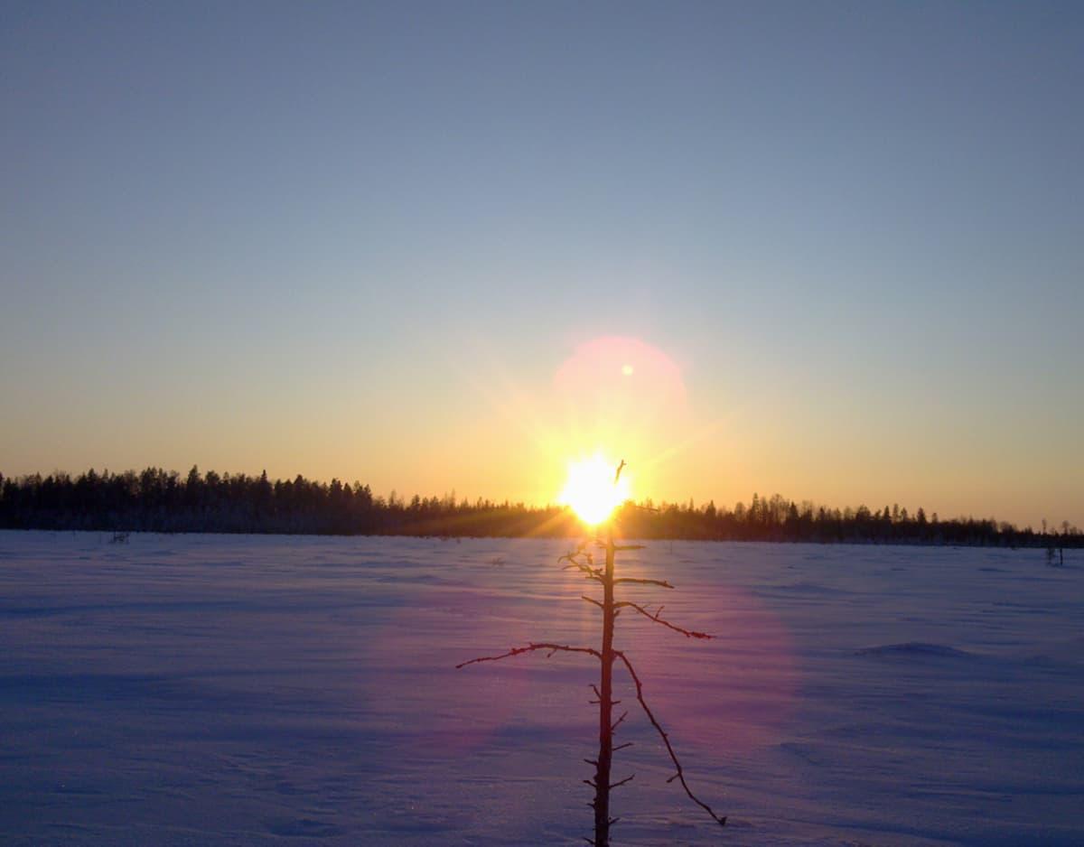 Kuvassa aurinko on laskemassa lumisen maiseman taakse,