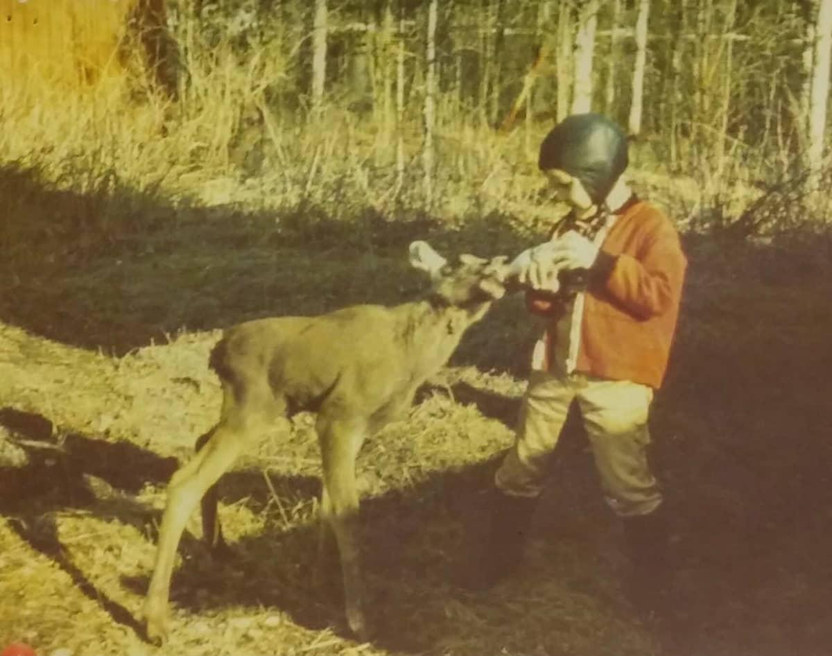 Vanhassa valokuvassa pikkuinen poika juottaa tuttipullolla maitoa lähes itsensä kokoiselle hirvenvasalle.
