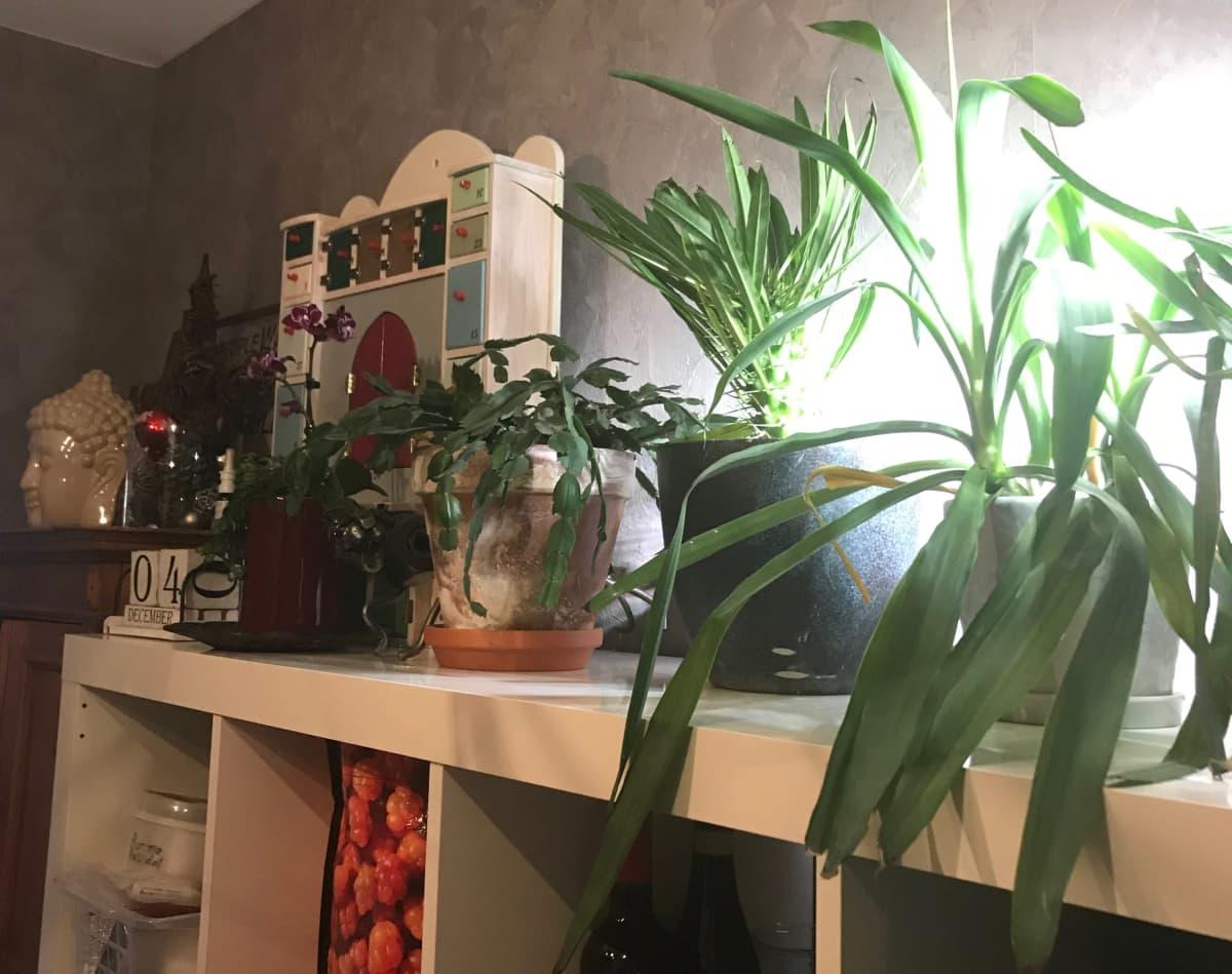 kasveja hyllyn päällä