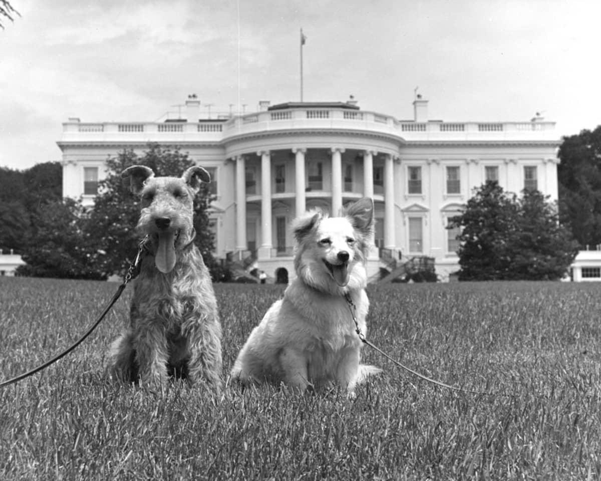 Kuvassa ovat koirat Charlie ja Pushinka.