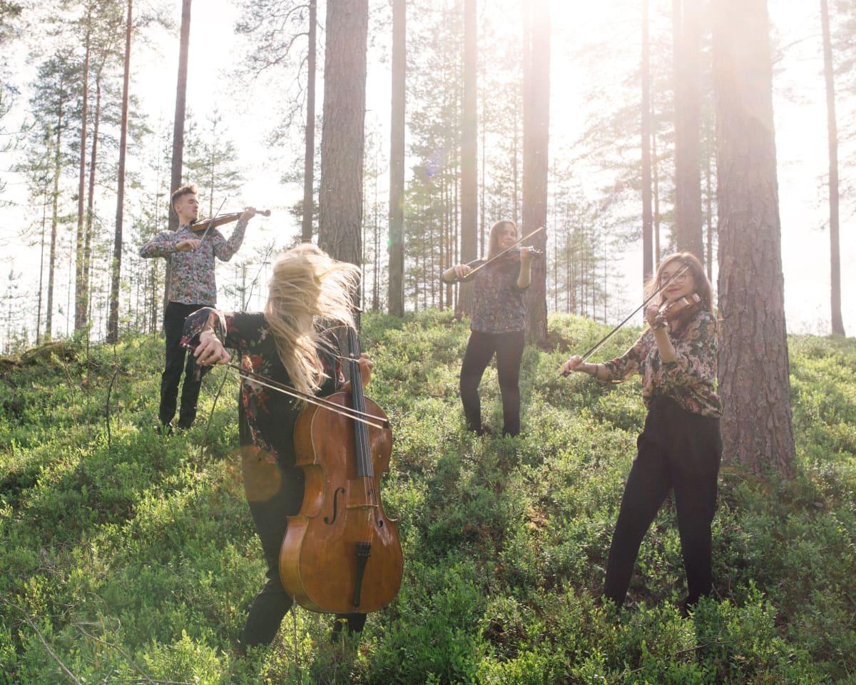 Metsässä soittaa neljä ihmistä jousisoittimia.