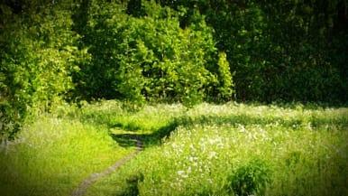 kesäinen niitty, käsitelty kuva