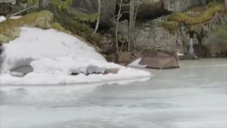 Video: Kuutti lumipesässään